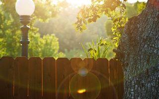 Бесплатные фото двор,забор,фонарь,улица,солнце,утро,дерево