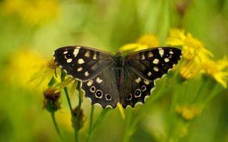 Бесплатные фото бабочка,лес,трава,цветок,ромашка,рисунок,крылья