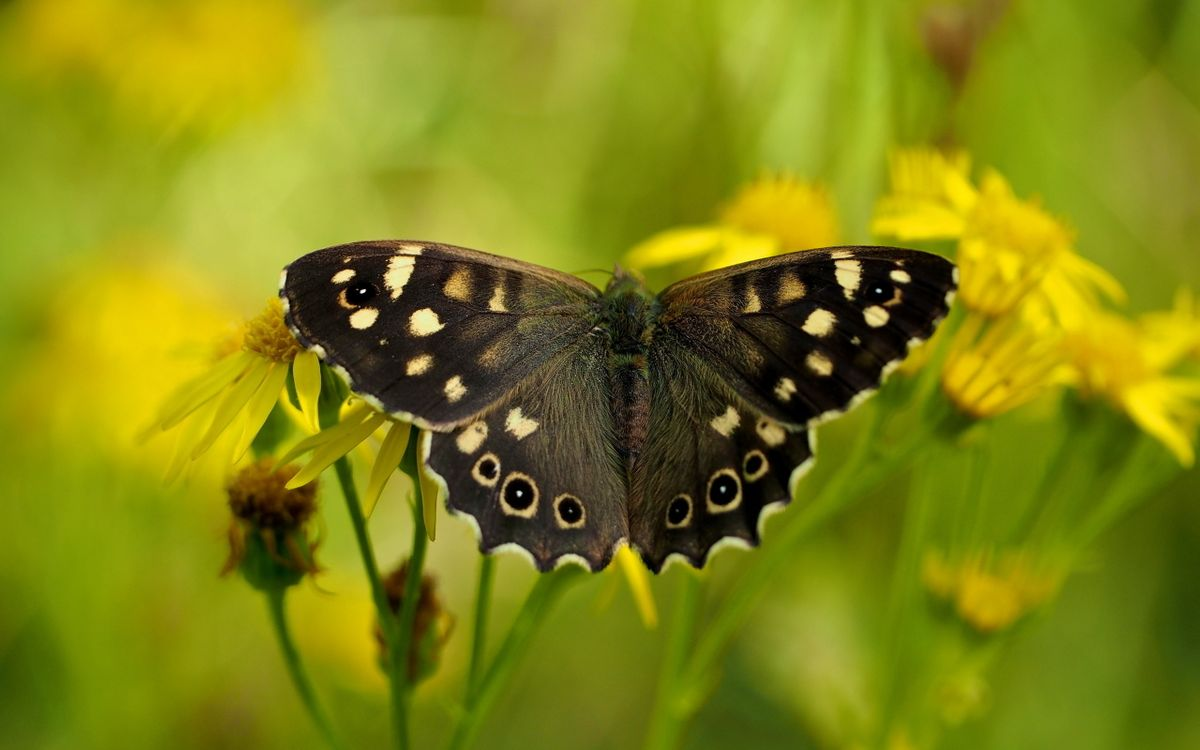 Free photo butterfly, forest, grass - to desktop