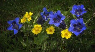 Бесплатные фото цветок, цветы, флора