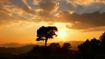 Фото бесплатно дерево, солнце, лучи