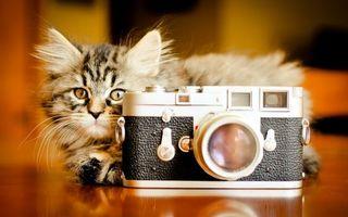 Фото бесплатно котенок, кот, фотоаппарат, фото, шерсть, пушистый, полосатый, уши, глаза, нос, лапки, усы, кошки
