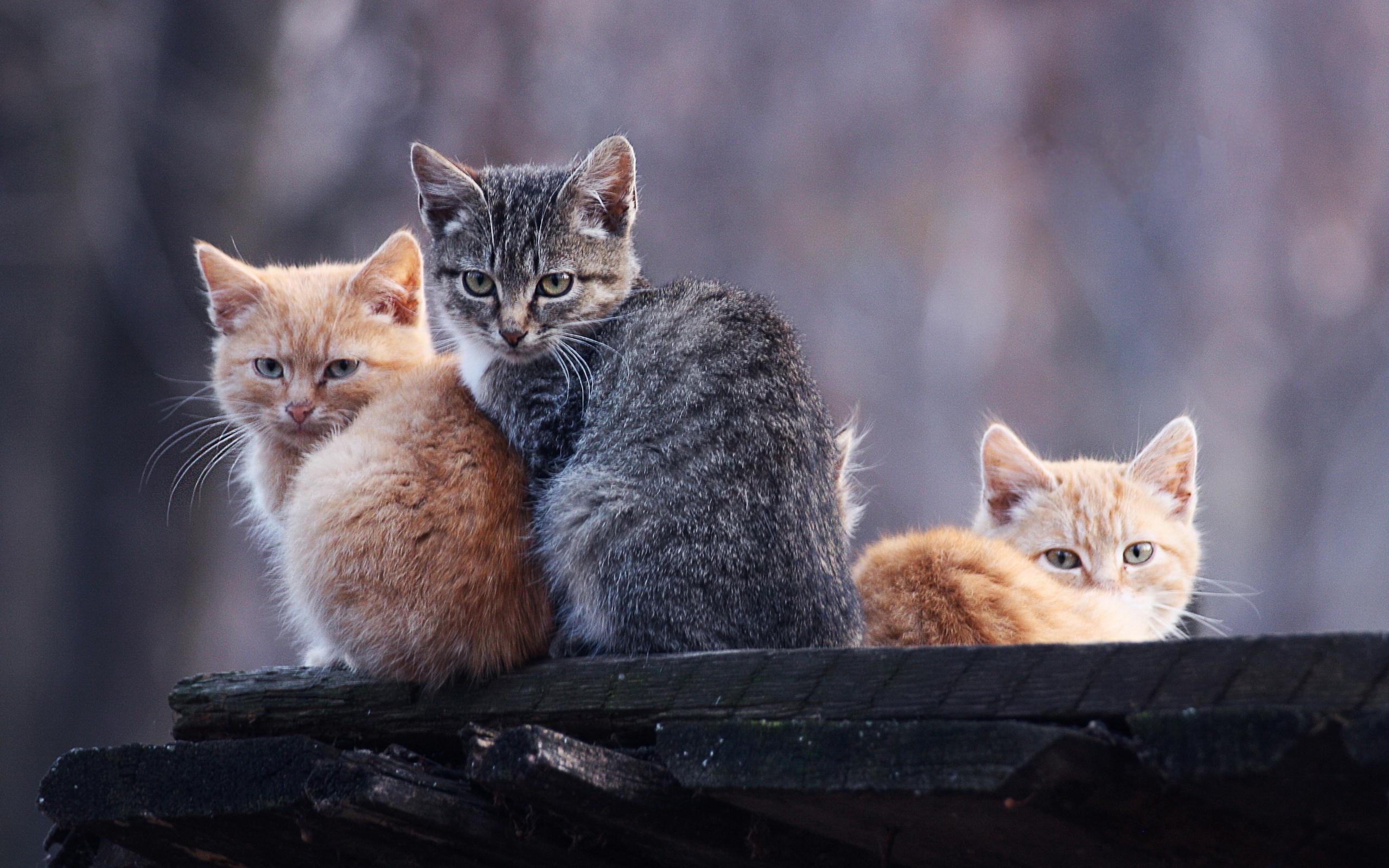 котята, морды, лапы