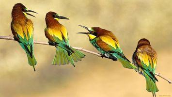 Фото бесплатно крылья, хвосты, зеленые
