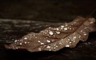 Бесплатные фото лист,капли,вода,роса,листок,осень,листопад