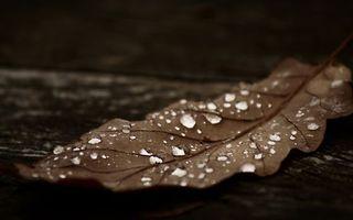 Фото бесплатно лист, капли, вода, роса, листок, осень, листопад, природа
