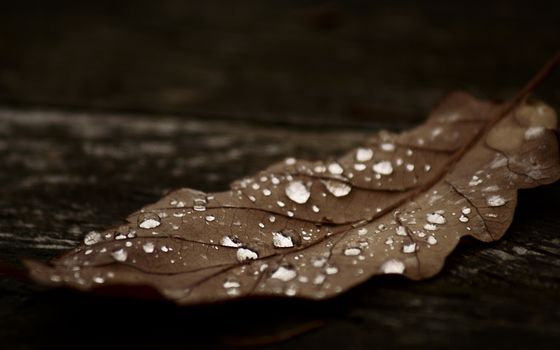 Photo free leaf, drops, water