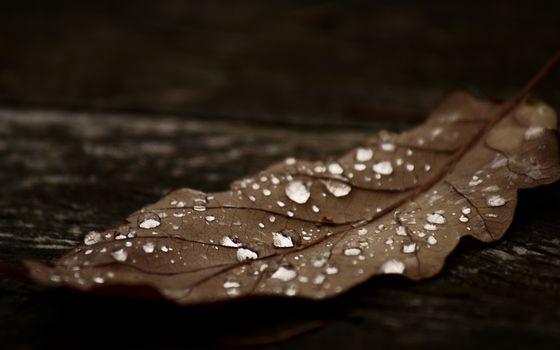 Photo free leaf, drops, water