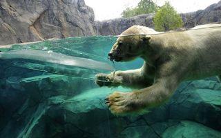 Заставки медведь, озеро, охота
