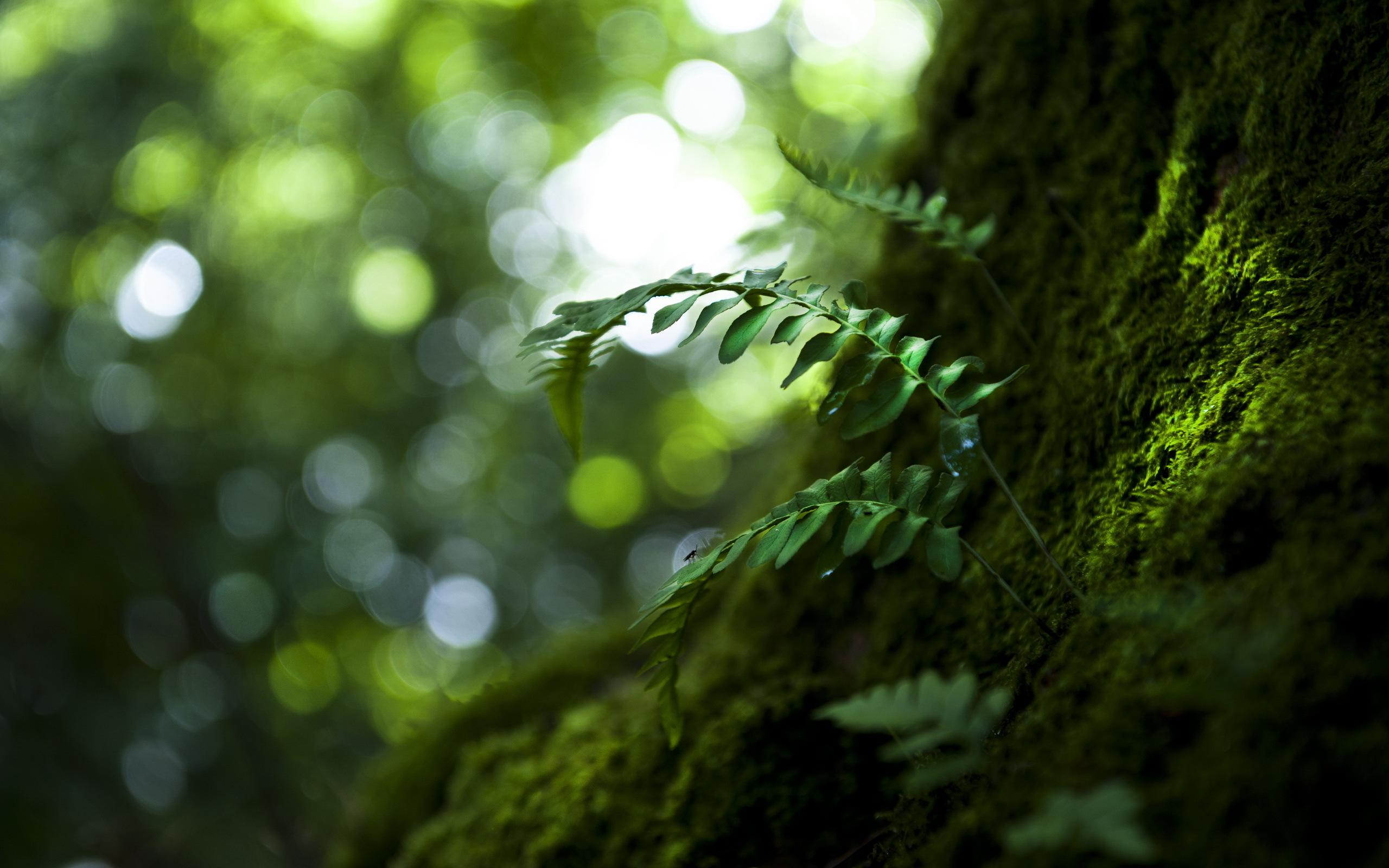 Зеленый мох на камне бесплатно