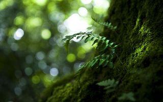 Фото бесплатно папоротник, трава, лес