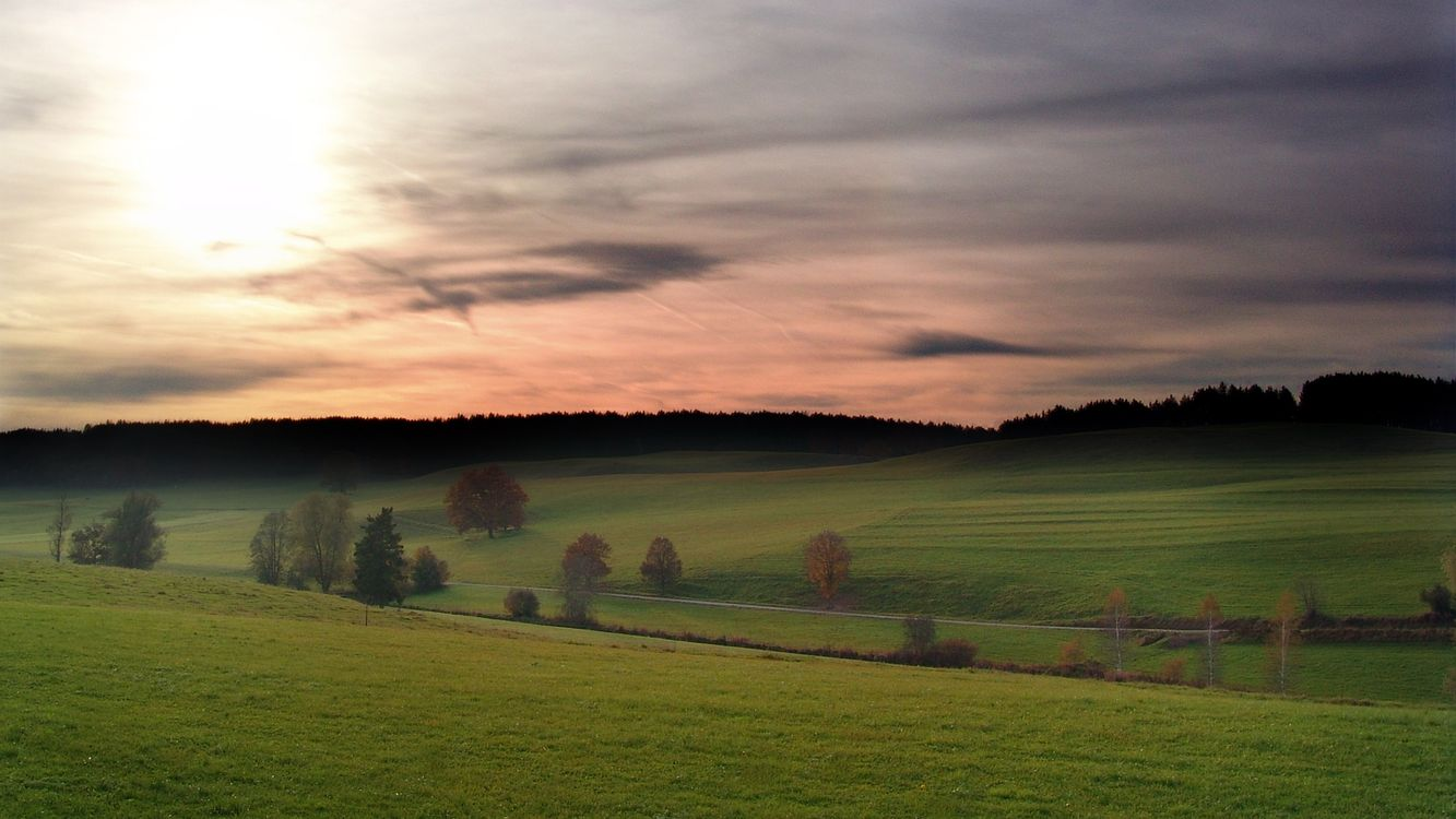 Обои поле, трава, зеленая, деревья, небо, тучи, природа на телефон | картинки природа