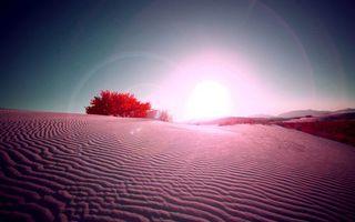 Фото бесплатно пустыня, песок, деревья
