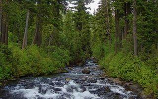 Бесплатные фото река, течение, камни, лес, кустарник, деревья