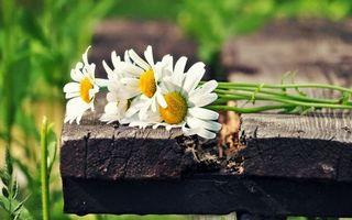 Бесплатные фото ромашки, лепестки, листья, стебель, скамейка, лавочка, поле