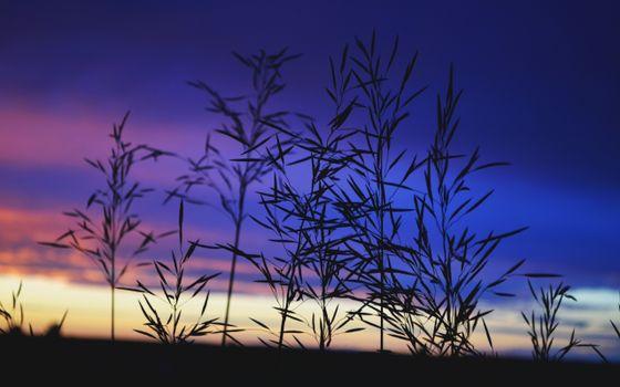 Фото бесплатно трава, зелень, небо