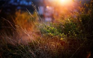 Фото бесплатно трава, осень, лучи