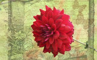 Фото бесплатно цветок, лепестки, стебель