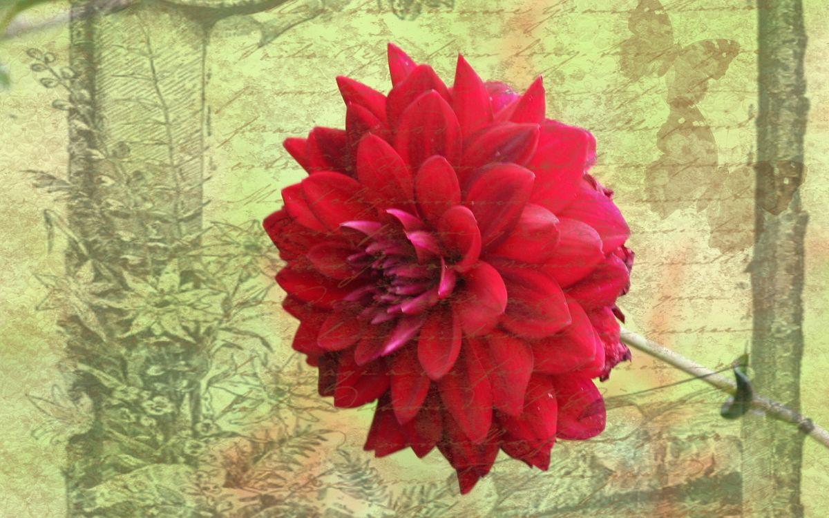 Фото бесплатно цветок, лепестки, стебель, листья, фон, рисунок, цветы, цветы