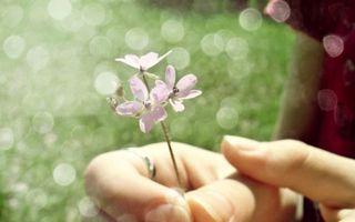 Фото бесплатно цветок, рука, пальцы