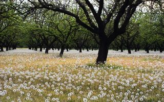 Фото бесплатно цветы, одуванчики, деревья