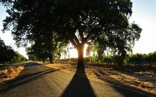 Фото бесплатно закат, солнце, дерево