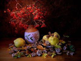 Бесплатные фото натюрморт,ваза,яблоки,ветки,ягоды