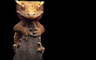 Бесплатные фото ящерица, морда, глаза, лапы, чешуя
