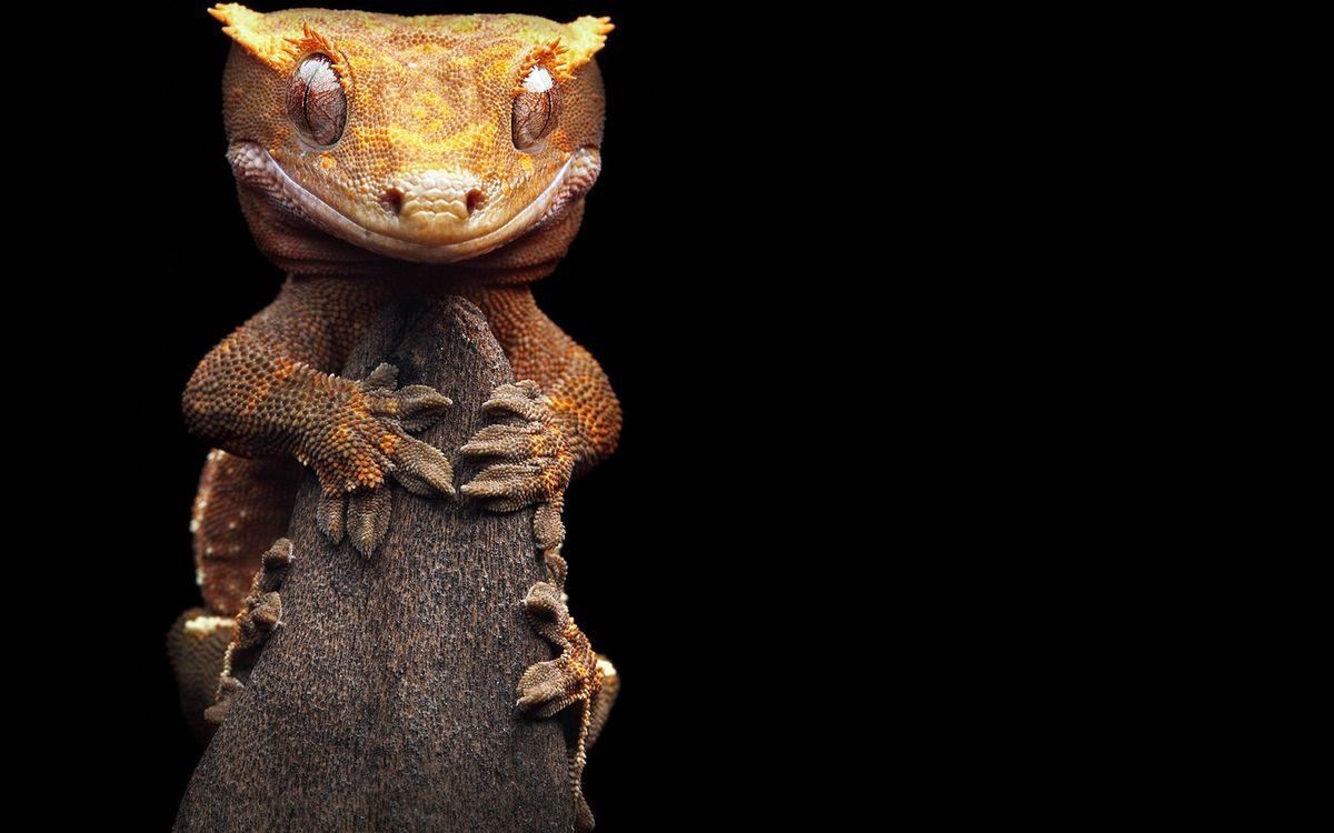 Фото бесплатно ящерица, морда, глаза - на рабочий стол