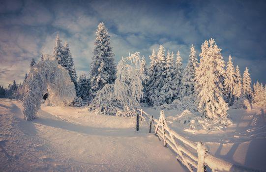 Бесплатные фото закат,зима,ели,деревья,сугробы,пейзаж