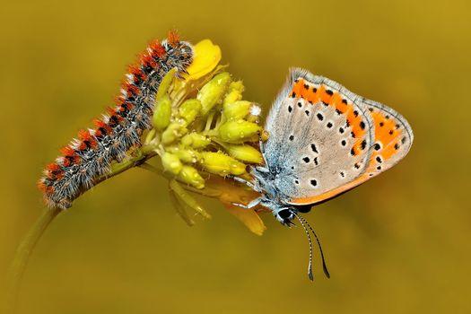 Photo free flower, caterpillar, butterfly