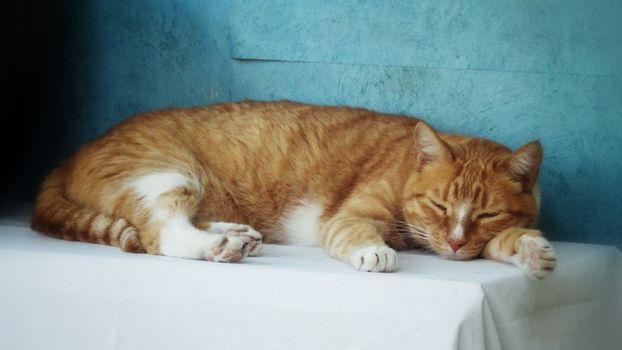 Фото бесплатно рыжий кот, стол, сон