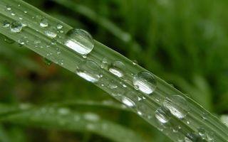 Бесплатные фото трава, лист, прожилки, капли, вода, роса