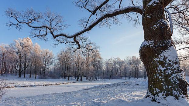 Фото бесплатно Санкт-Петербург, Александровский парк, Русская зима