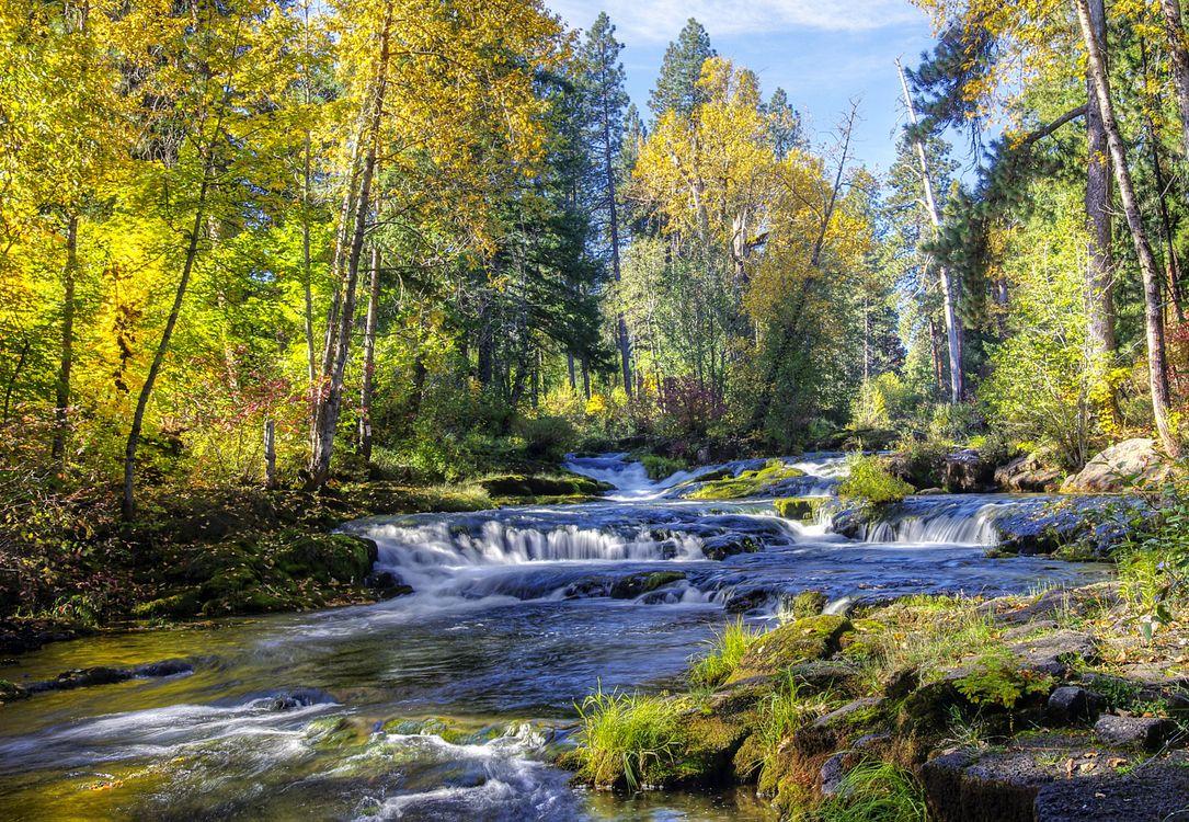 Фото бесплатно осень, лес, деревья, река, природа, природа