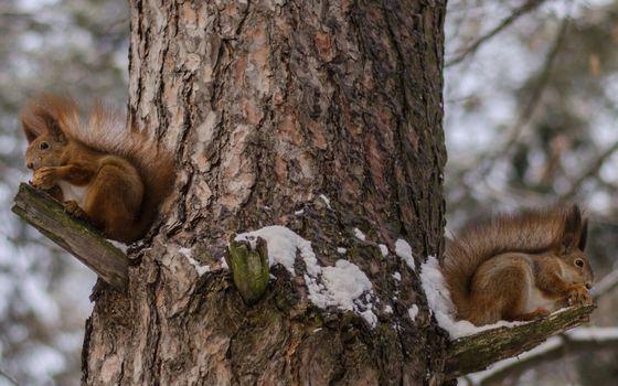Photo free winter, squirrels, muzzles