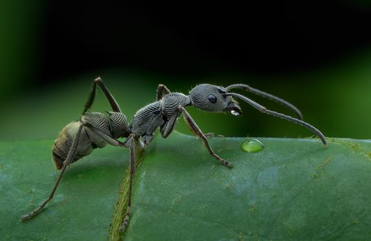 Wallpaper macro, ant on the desktop high quality