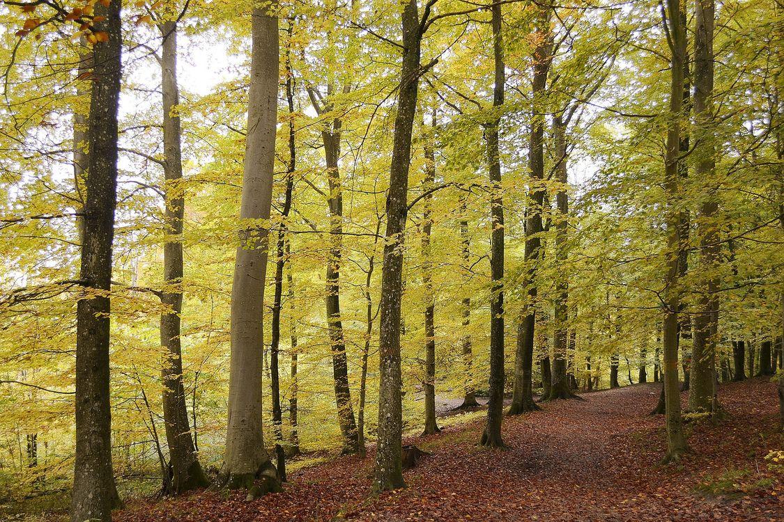 Фото бесплатно осень, лес, парк, деревья, пейзаж, пейзажи