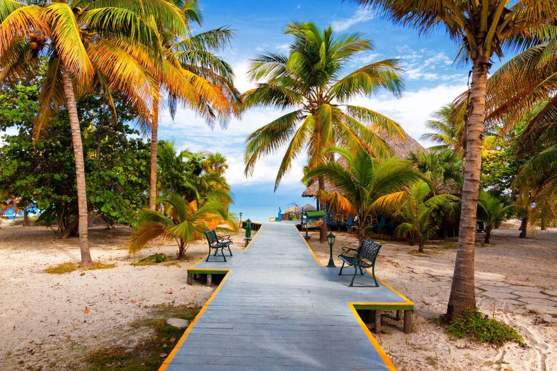 Free photo palms, platform, benches - to desktop