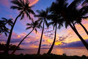 Бесплатные фото закат,море,пальмы,пейзаж