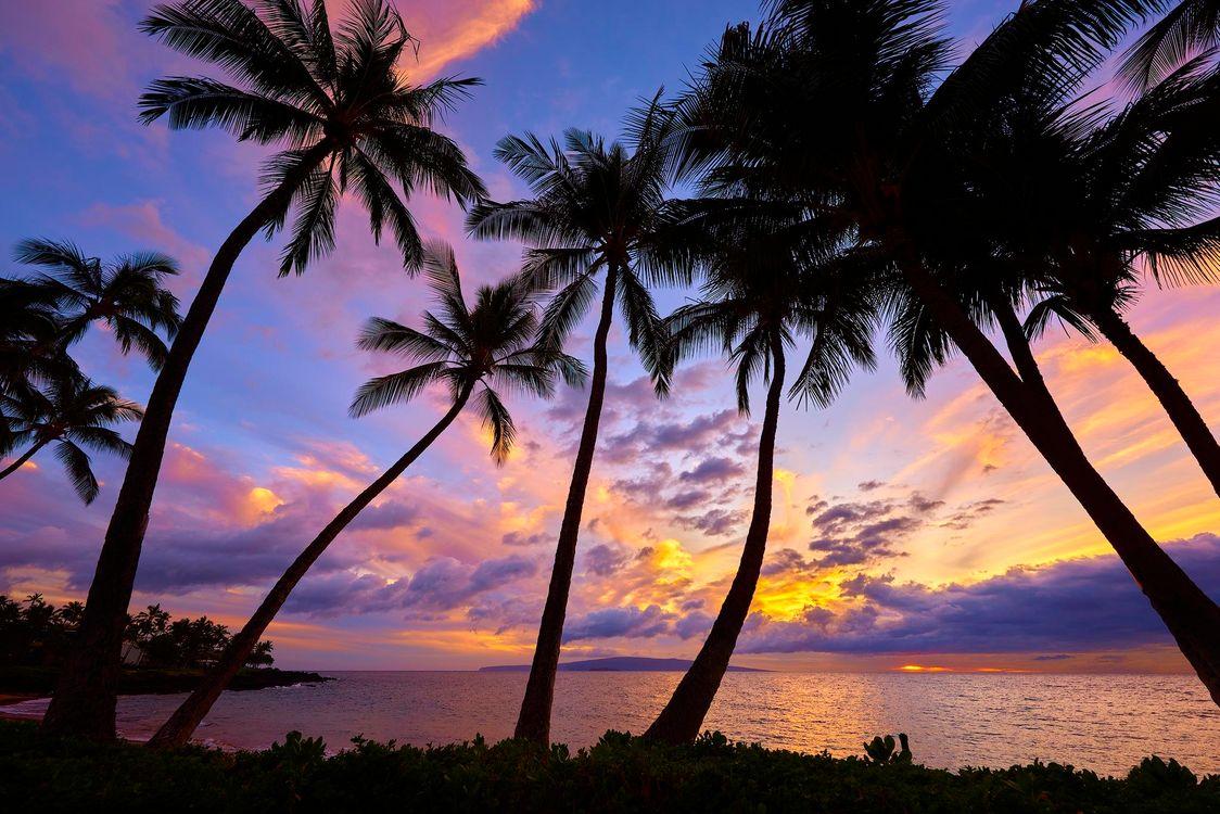 Фото бесплатно закат, море, пальмы, пейзаж, пейзажи