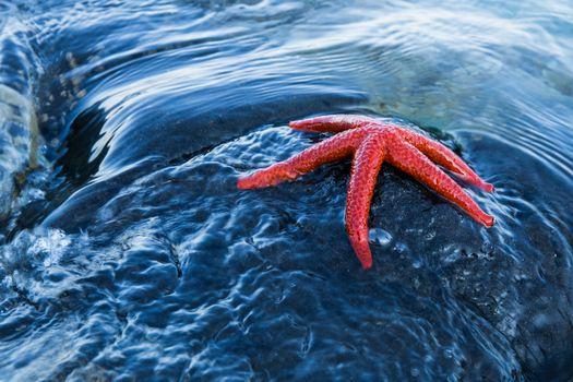 Фото бесплатно море, камень, морская звезда
