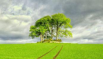 Бесплатные фото Шотландия, Стирлингсхайр, деревья, поле, пейзаж