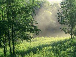 Фото бесплатно лето, поляна, трава, дымка, деревья, лес