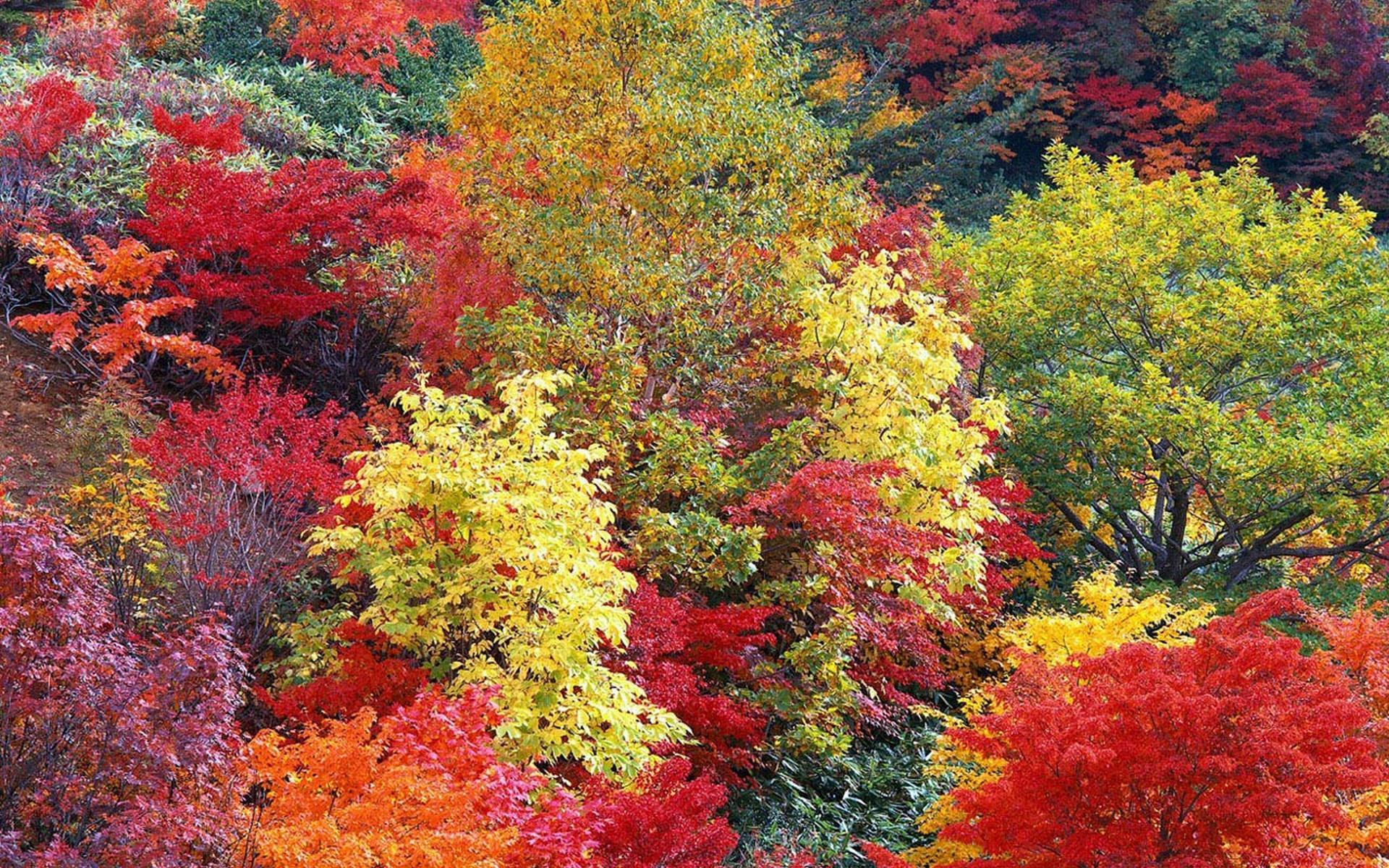 Хорошие, картинка анимация разноцветные осенние краски