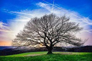 Бесплатные фото закат, поле, дерево, пейзаж