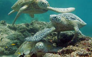 Заставки черепахи,морды,плавники,панцири,риф