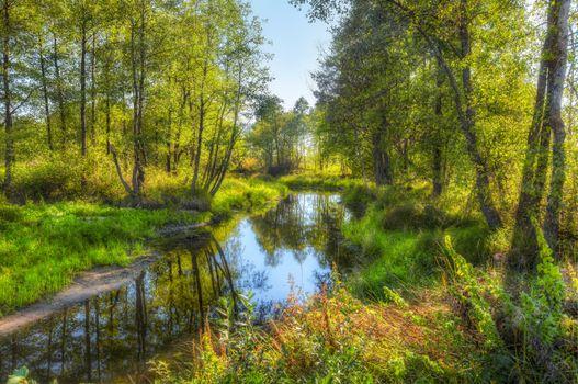 Фото бесплатно речка, лес, деревья