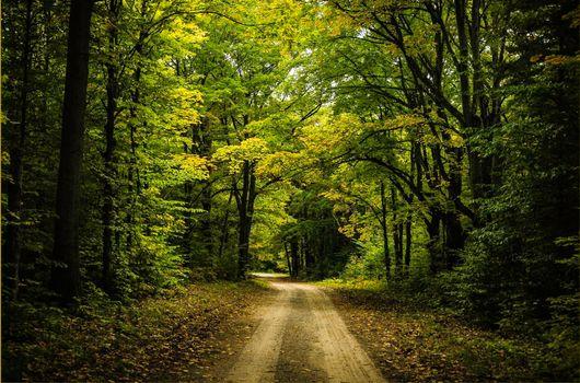 Фото бесплатно дорога, грунтовая дорога, лес