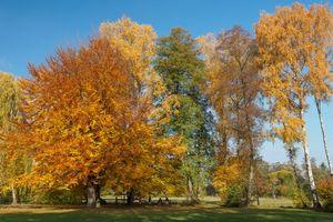Бесплатные фото осень,парк,поле,деревья,пейзаж